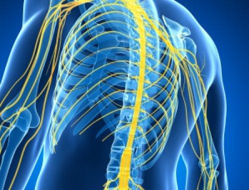 L'importance du système nerveux